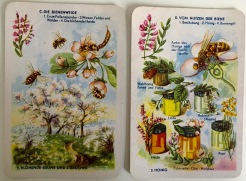 The bee's 'meadow & usefulness of the bee