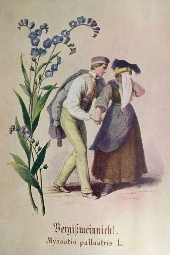 Illustration from 'Allerlei Kräuter' (Verlag der Eiserne Hammer)