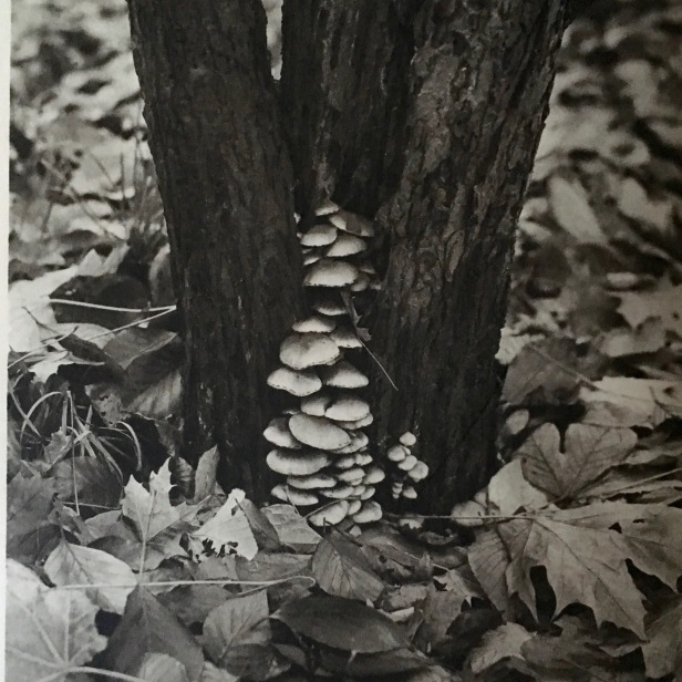 The autumnal forest releases aromas of fungus and rotting leaves