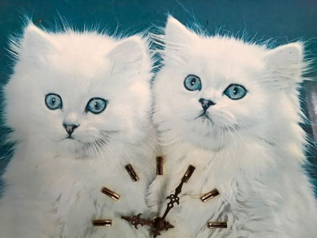 2 white cats agains blue background
