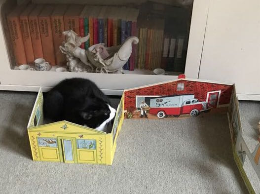 photo of a real cat sitting inside a cardboard house. Bookshelves and a decorative item in the background.